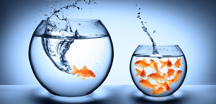 26743645 - goldfish jumping - improvement concept