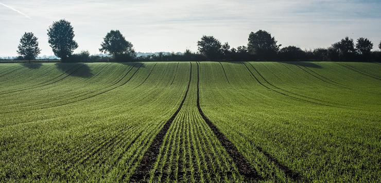 agriculture-OK.jpg