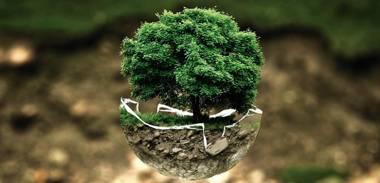 protección-árboles-ok.jpg
