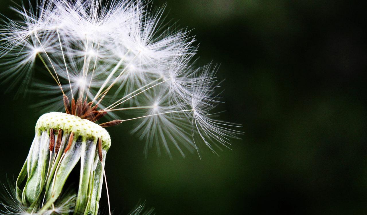 alergia-oki-1280x752.jpg