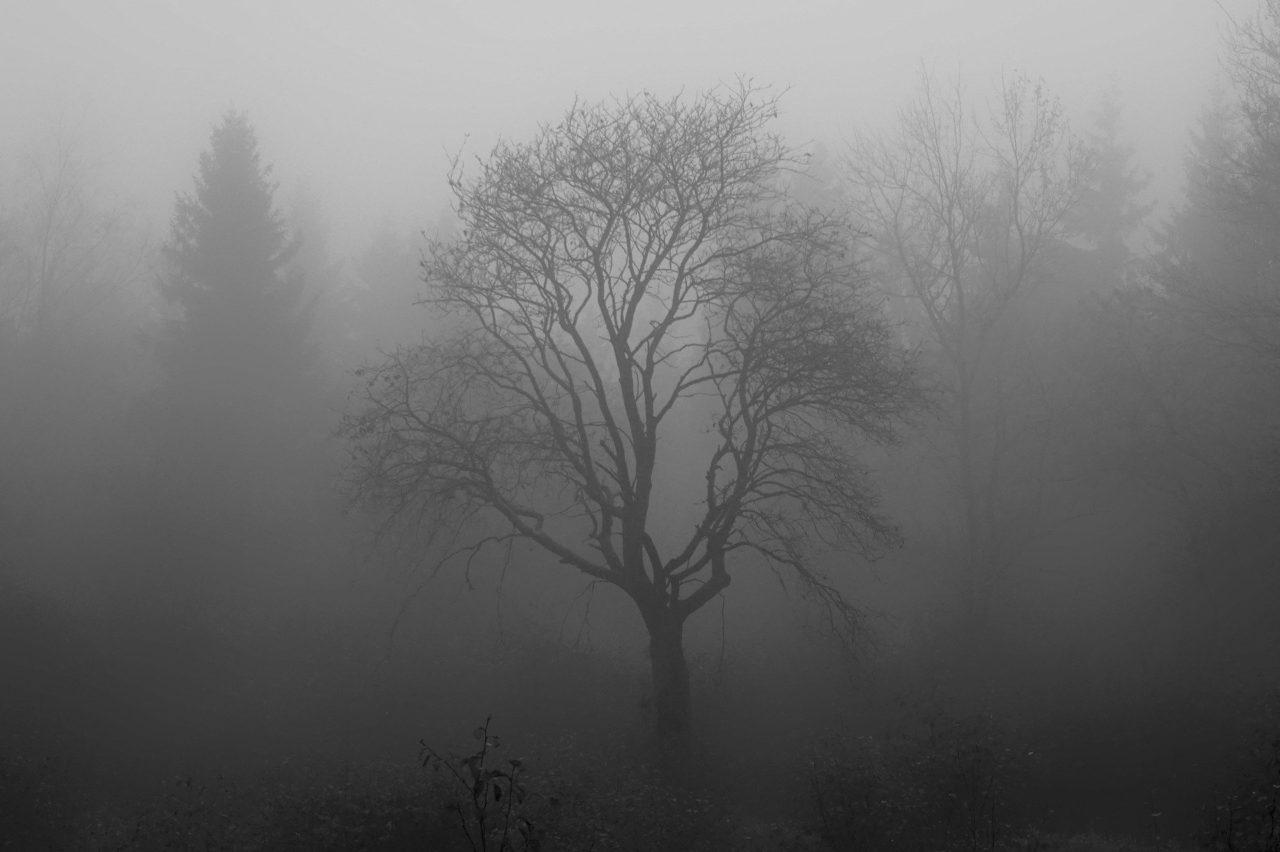 tree-1031814_1920-1280x852.jpg