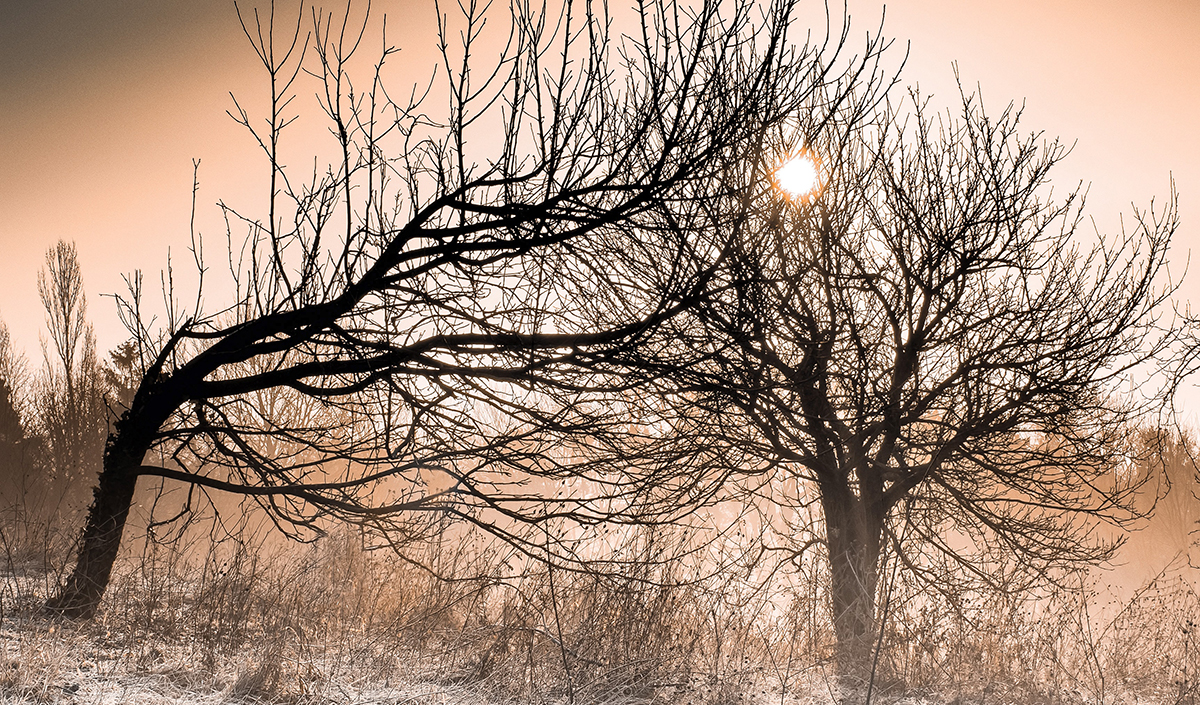 simon-berger-_a1lA5Ti_1I-unsplash.jpg